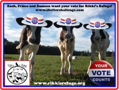 Zach, Frisco and Samson would love your daily Shelter Challenge vote for Rikki's Refuge! VOTE HERE: http://www.shelterchallenge.com/web/charityusa/nomineehome?userId=53331&nomineeId=17448 RIKKI'S REFUGE Life Unlimited of Virginia, Inc. 10910 Barr Lane Rapidan, VA. 22733 (540)-854-0870 mail@rikkisrefuge.org www.rikkisrefuge.org