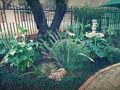 1 year old garden