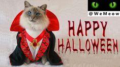 Halloween Cat Video On WeMeow YouTube Channel😻 www.youtube.com/c/WeMeow #cat #cats #wemeow #meow #catlife #cutecat #catlove #gatos #gatti #koty #katze #chats #kitty #kitten #kittens #lovecat #funnycat #catlooking #catofinstagram #catsoftumblr #catstagram #instapets #instacat #pet #pets #halloween #cathalloween #halloweencostume #happyhalloween