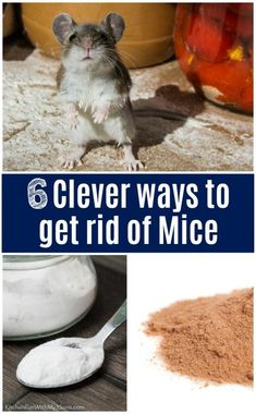 Mouse Deterant, House Mouse, Diy Mice Repellent, Insect Repellent, Mole Repellent, Keep Mice Away, How To Deter Mice, Mouse Poison, Catch A Mouse