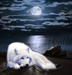 #wolfart