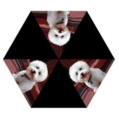 Bichon Frise Dog Umbrella, I want this! lolz