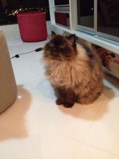 Frederico, meu afilhado gato...