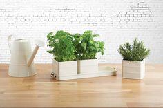 KitchenCraft Living Nostalgia Indoor Metal Herb Pots and Tray Set, 39 x 12 x 10 cm - Antique Cream Succulent Pots, Planter Pots, Indoor Plants Clean Air, Kitchen Window Sill, Herb Pots, Plant Care, Fresh Herbs, Metallica, Garden Inspiration