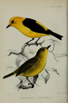 Proceedings of the Zoological Society of London.. London :Academic Press, [etc.],1833-1965..
