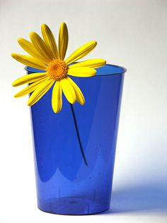 Cobalt Blue & Yellow -- my favorite combination of color