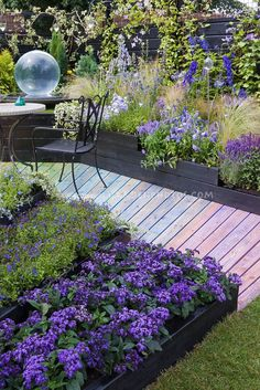 Fantastic color themed purple, lavender, blue garden with wooden rainbow walkway path, Heliotropium Scentropia Dark Blue heliotrope, lobelia and clematis vine on black fence.