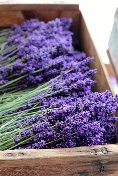 Lavender... Gorgeous!