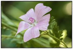 Flower_DGp