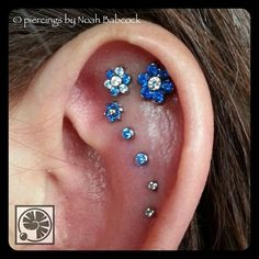 Seven ear piercings with jewelry by #industrialstrength and #neometal (at Evolution Piercing)