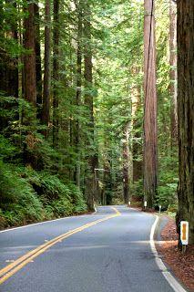 Humboldt Redwood State park & Fortuna, CA