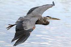Resultado de imagen para herons