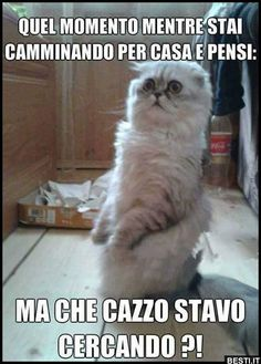 l' Alzheimer incalza Funny Images, Funny Photos, Animal Memes, Funny Animals, Italian Memes, Serious Quotes, Funny Pins, Cat Memes, Funny Moments