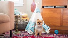 virtual real estate: Dog Teepees