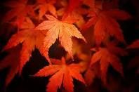 lovely fall leaves