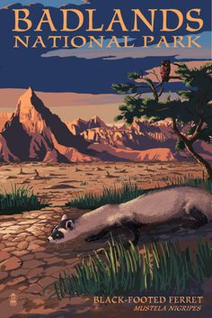 Badlands National Park, South Dakota - Ferret at Night - Lantern Press Poster