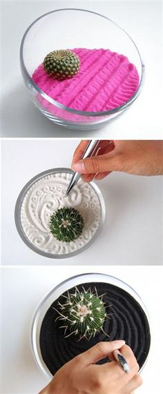 Colorful Zen Gardens With Cactuses You Can Modify