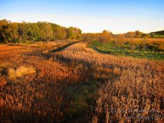 Minnesota Fall Colors | Most Unusual Destinations for Viewing Fall Colors