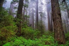 Into The Woods, Redwood Coast, Northern California-Vincent James-Premium Photographic Print Digital Technology, Northern California, Professional Photographer, Mother Nature, Framed Artwork, Find Art, Coast, Pure Products, Woods