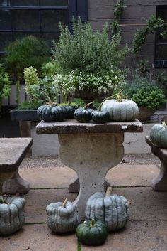 MORE pumpkins to grow Outdoor fall decor - rosemary, alyssum, green gourds.