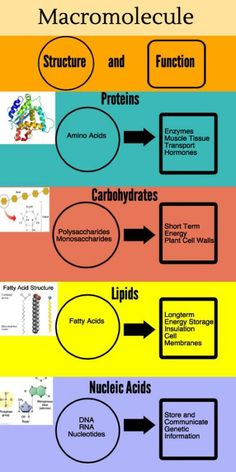 How do the four biological macromolecules differ chegg macromolecules 2 piktochart visual fandeluxe Choice Image
