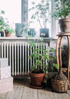 pelargon_Kristin_lagerqvist-8985