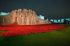 paul cummins and tom piper have infilled the famous dry moat at the tower of london with 888,246 ceramic poppies for remembrance day.