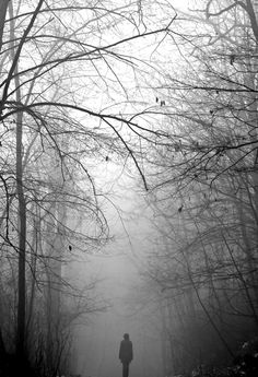 Alone with the beating of my heart...and the trees