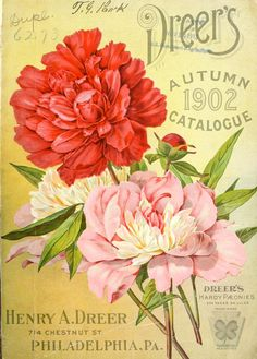 Front cover of Dreer's Autumn 1902 Catalogue with an illustration of 'Dreer's Hardy Paeonies'. U.S. Department of Agriculture, National Agricultural Library Henry A. Dreer. 714 Chestnut Street. Philadelphia, Pa. archive.org