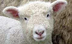 Top 10 Reasons Not to Wear Wool  I had no idea of these horrors, now I know there is no excuse