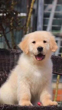 Super Cute Puppies, Cute Little Puppies, Puppies And Kitties, Cute Cats And Dogs, Doggies, Cute Puppies Images, Adorable Puppies, Cute Wild Animals, Baby Animals Super Cute
