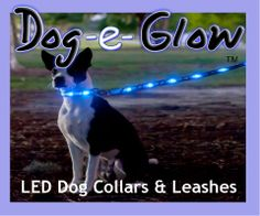 Gotta get these for Koda and Sasha the next time we camp. Would be so much better than the glowsticks.
