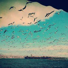讓伊斯坦布爾的海鳥們揭開這一週的序幕,展翅開飛吧! ©Sema Çetin