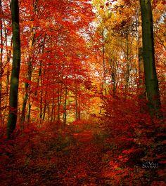 Autumn forest VIII by valiunic.deviantart.com on @deviantART