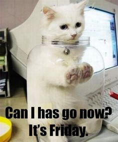 #tgif cat