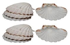 HIC's Natural Sea Shells, harvested from the waters of Ireland and Scotland, are perfect for cooking, baking and serving foods. Like decorative baking dishes, these natural seashells put the culinary spotlight on food for an eye-catching presentation. They're heat safe and can be used... - http://kitchen-dining.bestselleroutlet.net/product-review-for-harold-import-company-natural-baking-shells-set-of-8-4-natural-seashell/