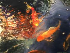J. Lombardi Koi in the Garden Pond. 2016 Pastel on paper 22 x 30""
