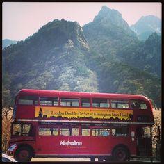 "@Graham Budd's photo: ""Seoraksan, #london #bus & #cherryblossom at the Kensington Resort. #korea #spring #nature #한국 #속조"""