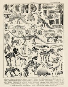 Vintage Dinosaur Skeletons French Print by michaelellisstudios Dinosaur Skeleton, Skeleton Art, Art Blue, Dinosaur Bedroom, Gaspard, Fox Print, Antique Books, Illustrations, Poster Wall