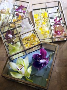 The style icon #orchid will give your home a substantial style boost.