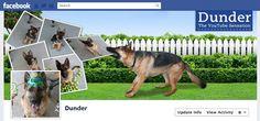 Dog Lover Facebook Profile Cover Idea