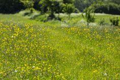 Wild flowers blooming at Bath Skyline, Prior Park Landscape Garden, Somerset