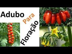 Tomates: Adubação para Segurar a florada + dica contra Nematoides - YouTube Pasta, Make It Yourself, Link, Garden, Potted Herb Gardens, Organic Fertilizer, Fertility, Fruit Holder, Exotic Fruit