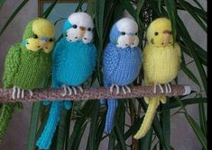 Crochet Parakeet ideas for Easy step by step