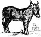 burro - small donkey used as a pack animal Burritos, Dictionary Definitions, English Dictionaries, New Words, Donkey, Animals, Smothered Burritos, Animales, Animaux