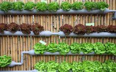 Como Fazer Jardim Vertical – 99 Graus