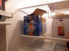 Gato en caja de cerveza.