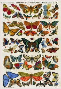Buy Liberty Puzzles Histoire Naturelle, a beautifully detailed wooden jigsaw puzzle. This puzzle sized by and has 608 pieces, Vintage butterfly print Illustration Papillon, Butterfly Illustration, Illustration Art, Vintage Illustrations, Photo Wall Collage, Collage Art, Arte Hippy, Art Inspo, Art Papillon