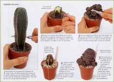 Entre pétalos y espinas...: Cómo realizar Injertos de Cactus