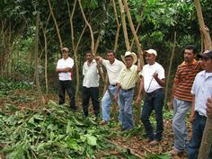 By the end of the day, every farmer present had decided to give up slash and burn and change to Inga alley cropping. And they left saying that they were sure that once their neighbours could see them using Inga and see all the benefits it brings, the rest of los limpios community would follow suit.